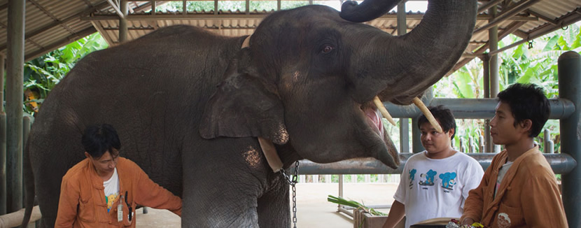 Friends of the Asian Elephant Hospital.jpg