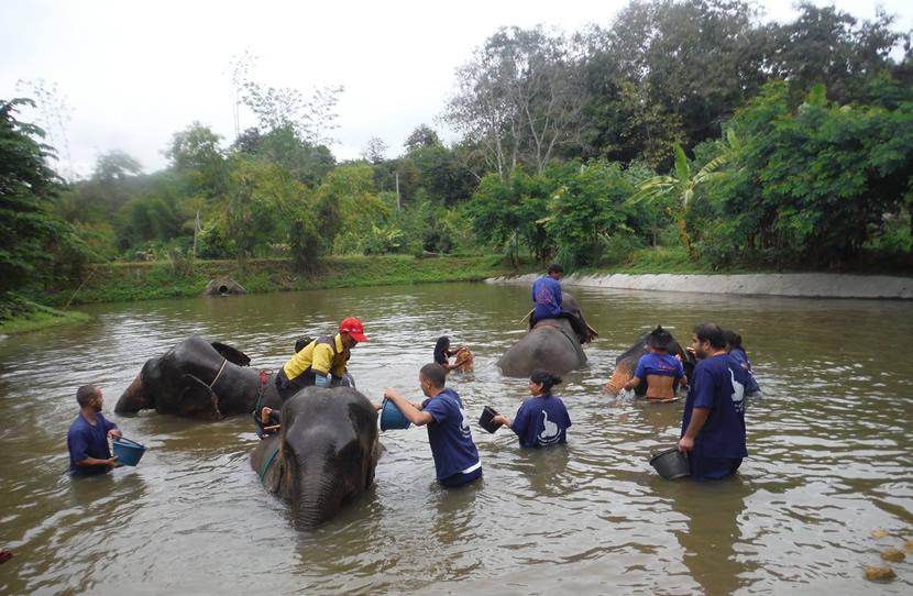 Baan Chang Elephant Park.jpg