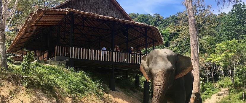 Phuket Elephant Sanctuary.jpg