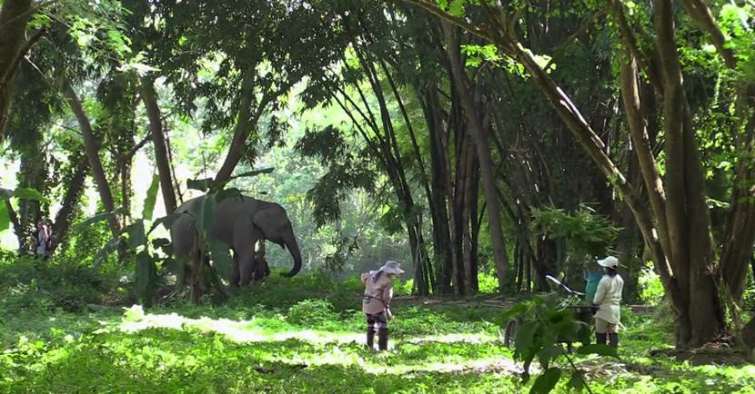 Elephant Valley Thailand.jpg