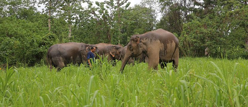 Elephant Natural Park.jpg