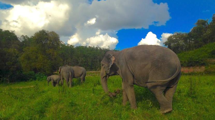 Patara Elephant Camp.jpg