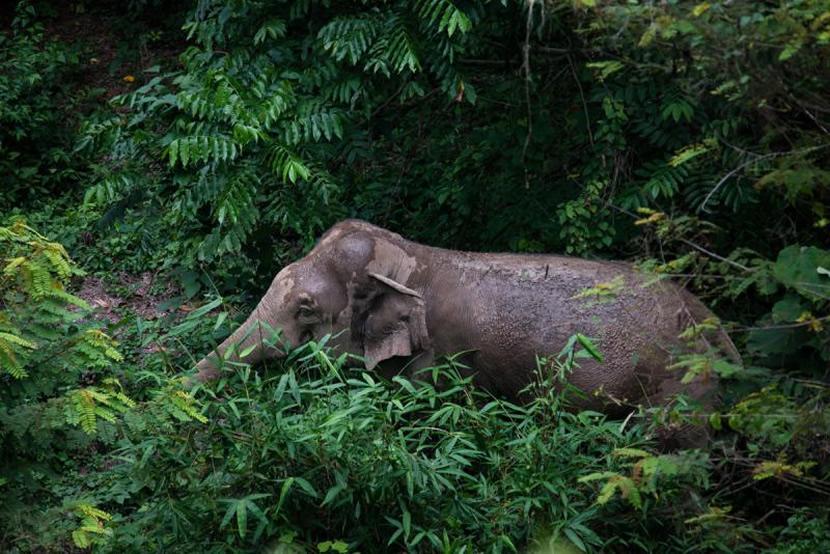 Kaeng Krachan National Park.jpg