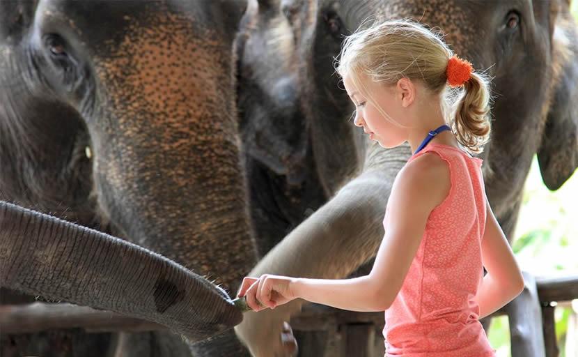 Elephant Hills Khao Sok.jpg