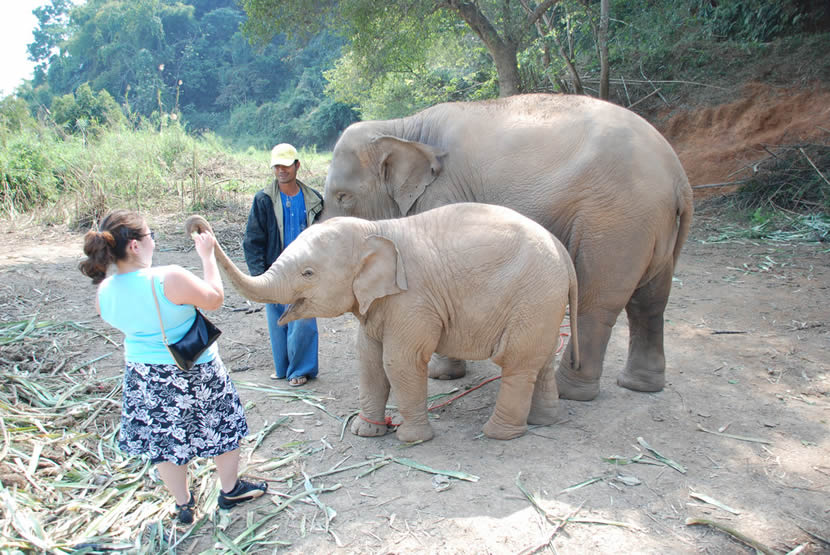 Anantara Golden Triangle Elephant Camp.jpg