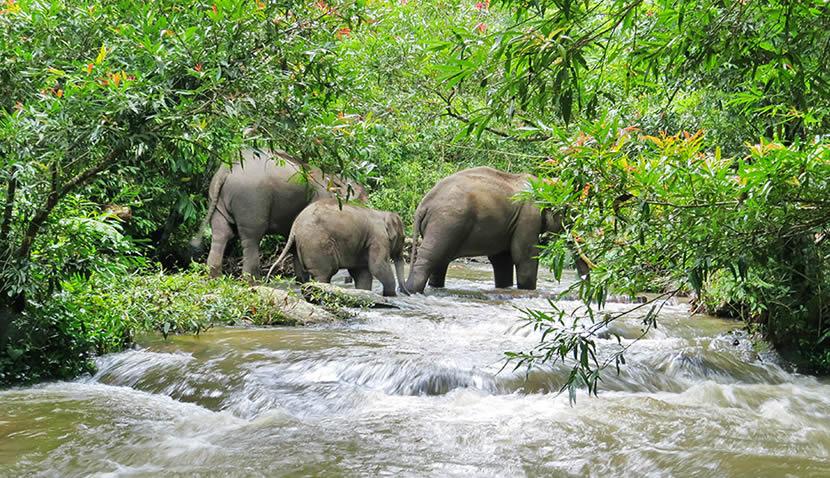 Elephant Rescue Park.jpg