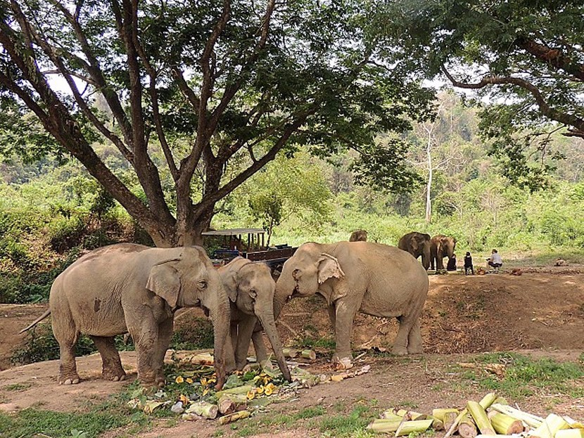 Boon Lott's Elephant Sanctuary.jpg