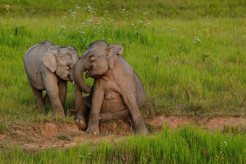 Khao Khiao National Park.jpg