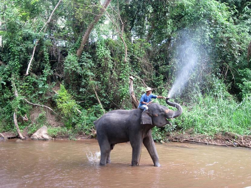 Ma Sha Elephant Camp.jpg