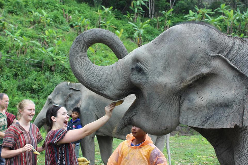 Elephant Jungle Sanctuary.jpg