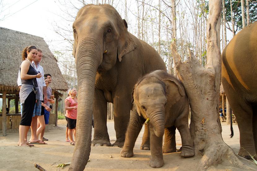 Patara Elephant Farm.jpg
