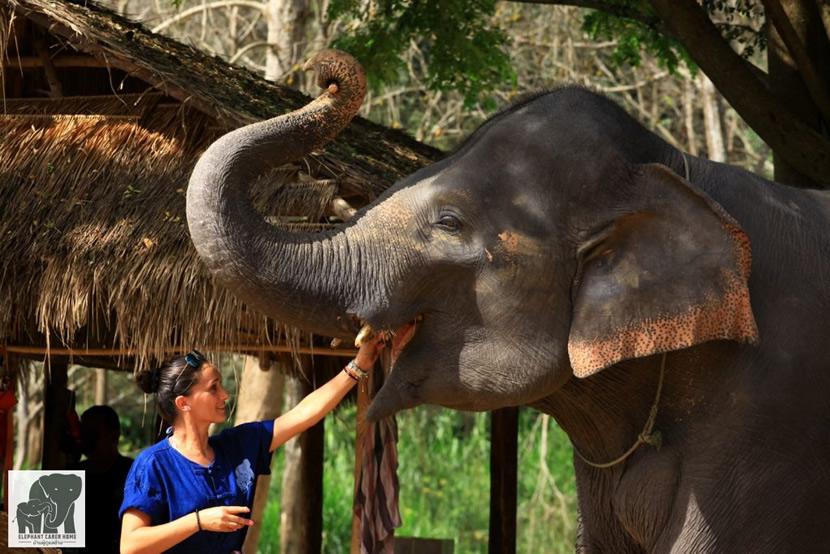 Elephant Carer Home.jpg
