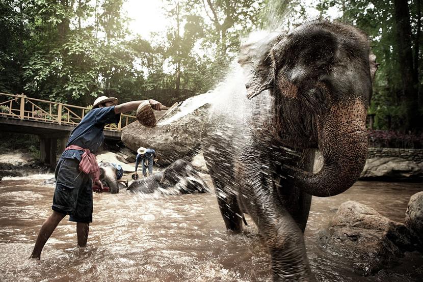 Maesa Elephant Camp.jpg
