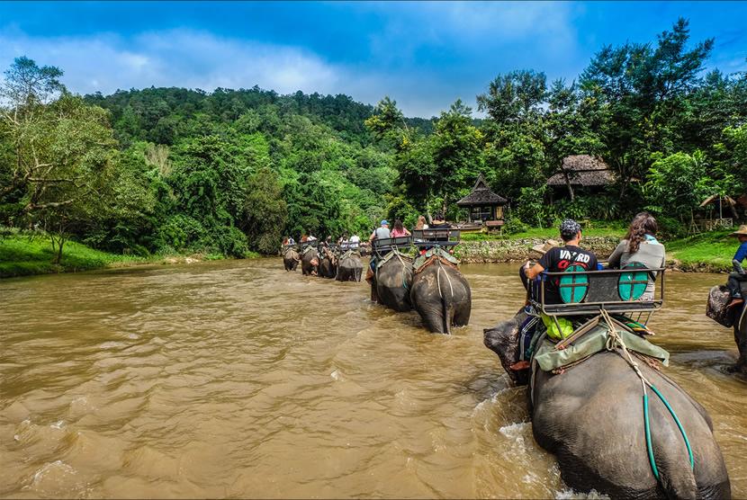 Maetaeng Elephant Park.jpg