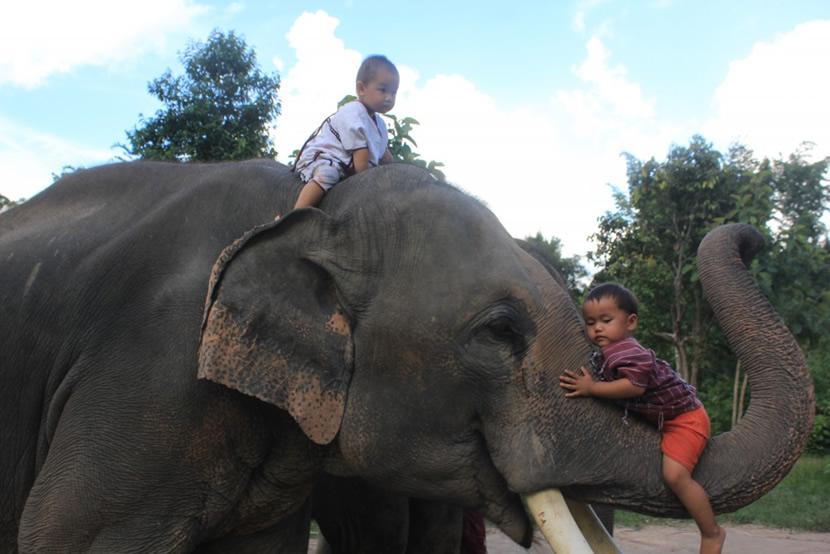 Karen Elephant Family.jpg