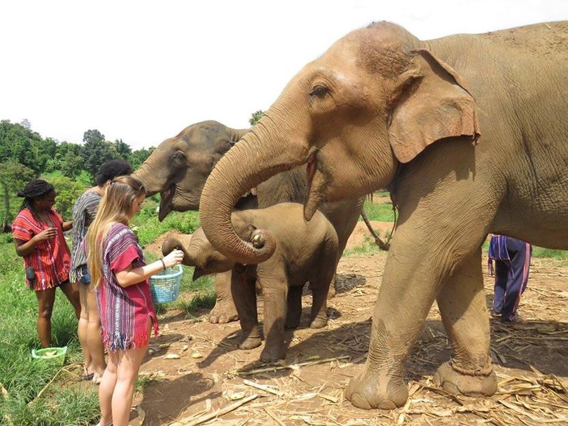 Elephant Green Park.jpg