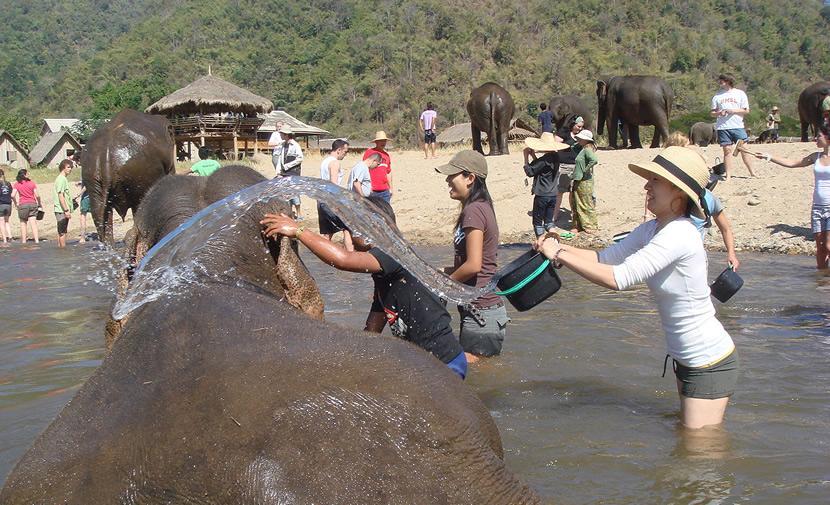 Elephant Nature Park.jpg