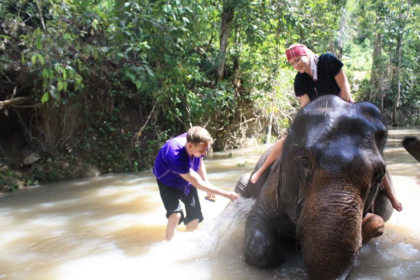 Elephant Discovery Chiang Mai.jpg