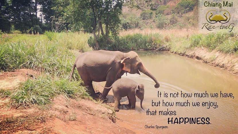 Ran Tong elephant camp.jpg