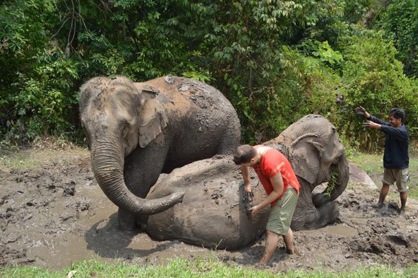Chiang Mai Elephant Land.jpg