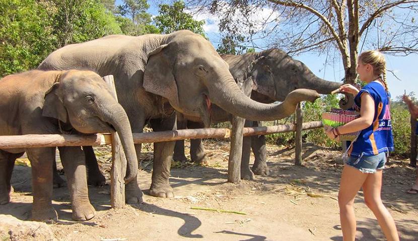 Blue Daily Elephant Care.jpg