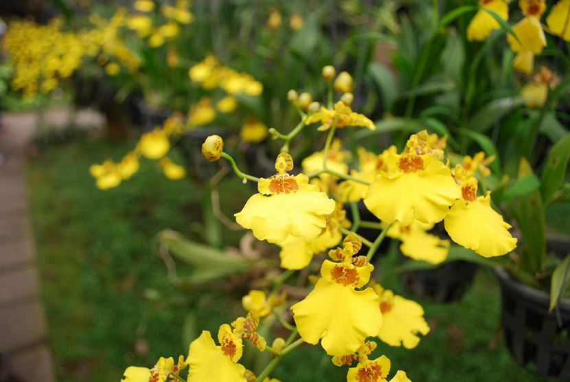 Bai Orchid and Butterfly Farm.jpg