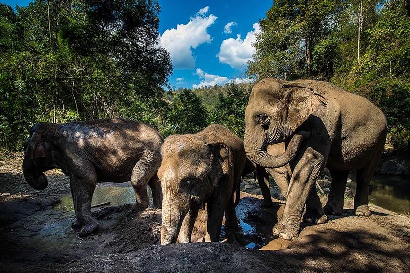Hug Elephant Sanctuary.jpg