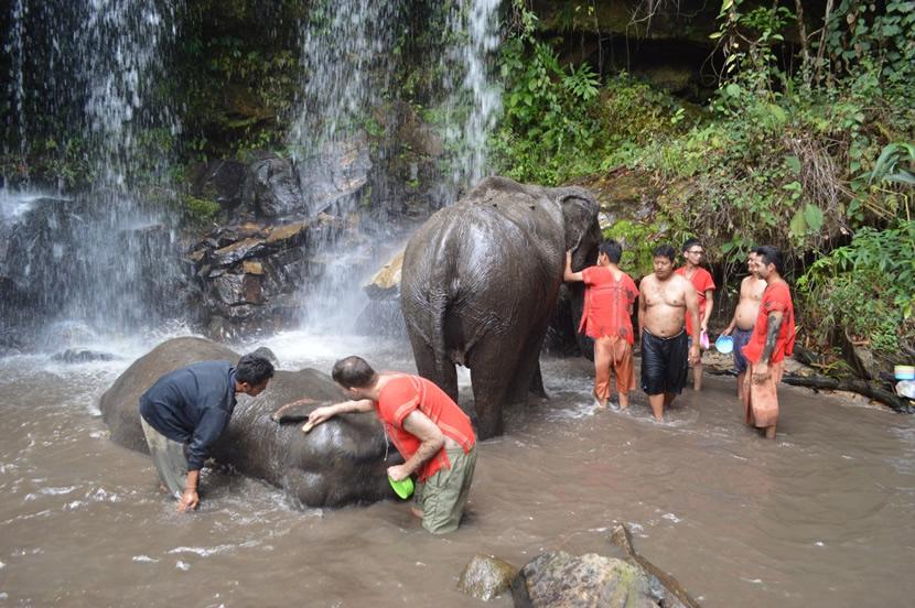 Chiangmai Elephant Land.jpg