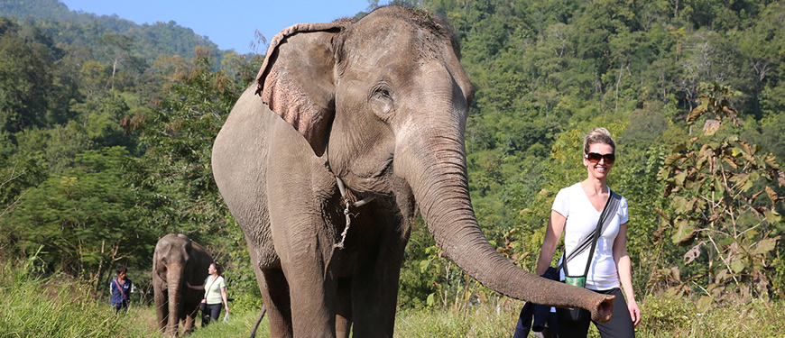 Top 10 Ethical Volunteer Elephant Sanctuary in Thailand.jpg