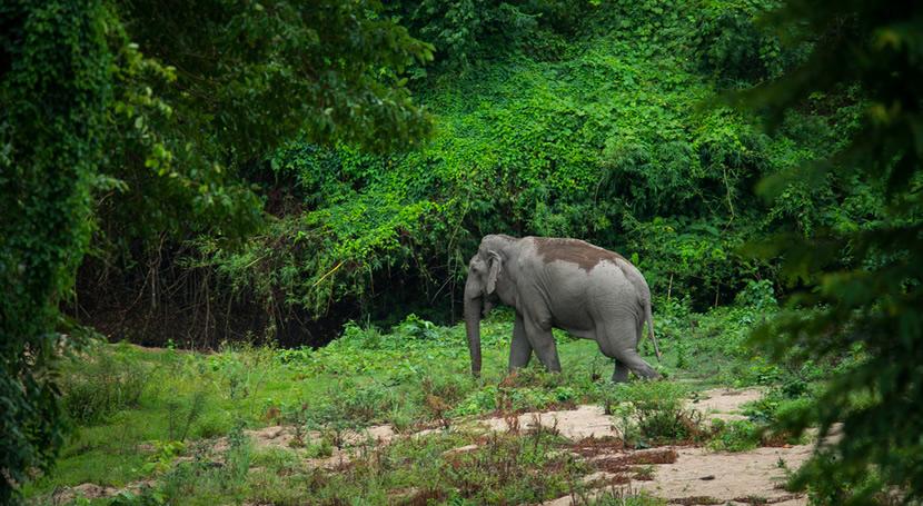 Thungyai-Huai Kha Khaeng Wildlife Sanctuaries.jpg