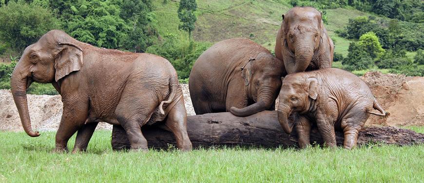 Top 5 Chiang Mai Elephant Tour.jpg
