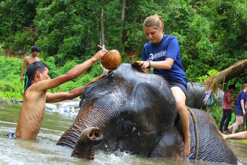 Karen's Tribe Native Elephants.jpg