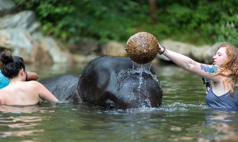 Phang Nga Elephant Park.jpg