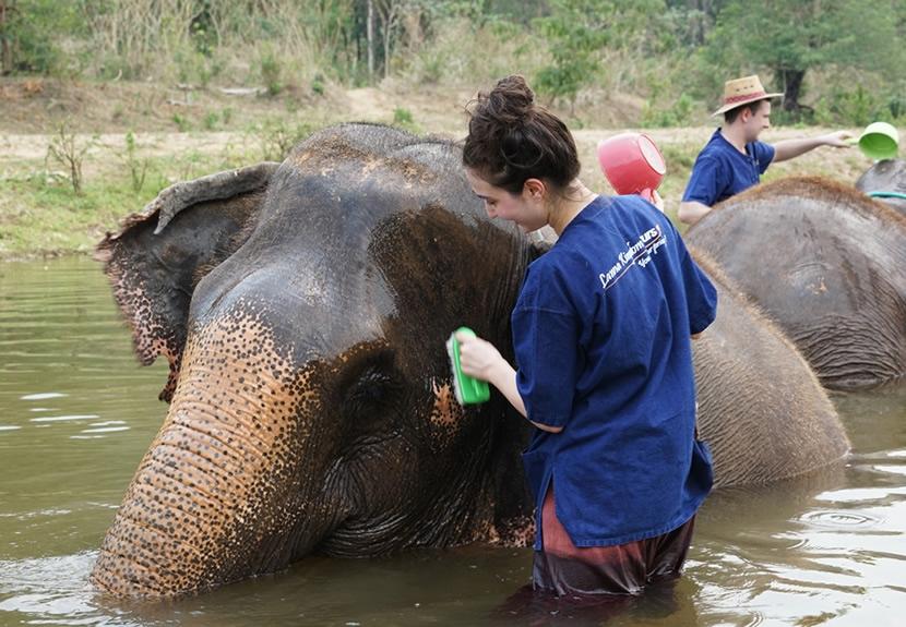 Lanna Kingdom Elephant Sanctuary.jpg