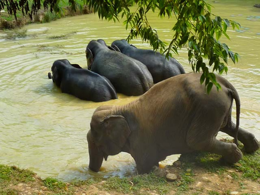 Boon Lott's Elephant Sanctuary.jpg