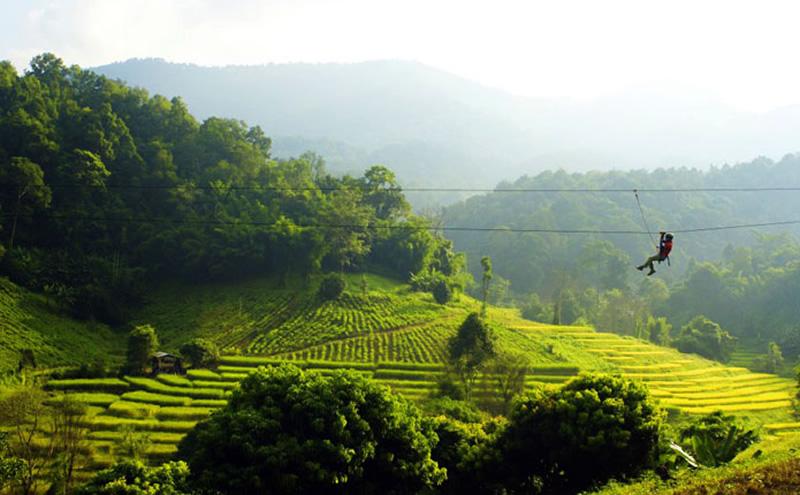 Zipline through a tea plantation.jpg