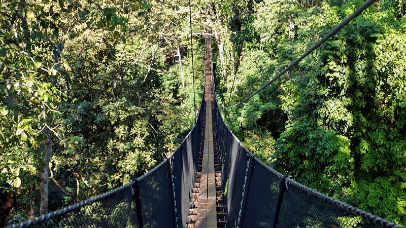 Go on a treetop walk adventure.jpg