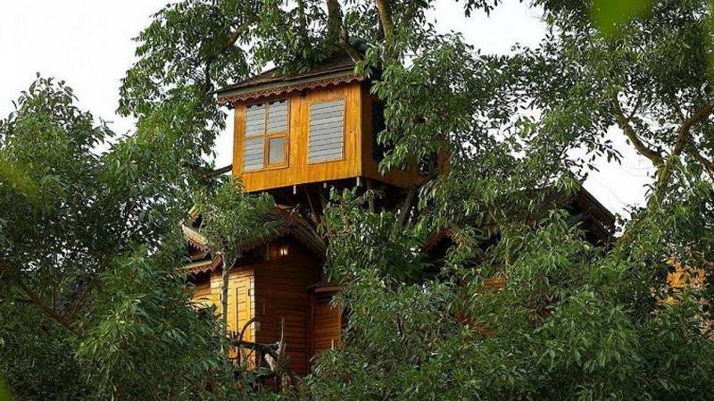 Climb a Treehouse.jpg