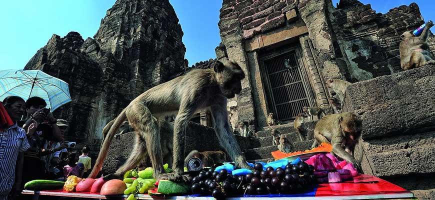 Prang Sam Yot Monkeys