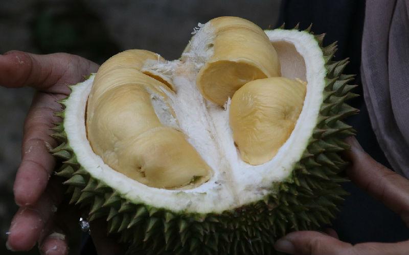 durian-1493310_1280.jpg