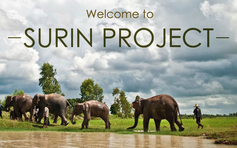 The Surin Project