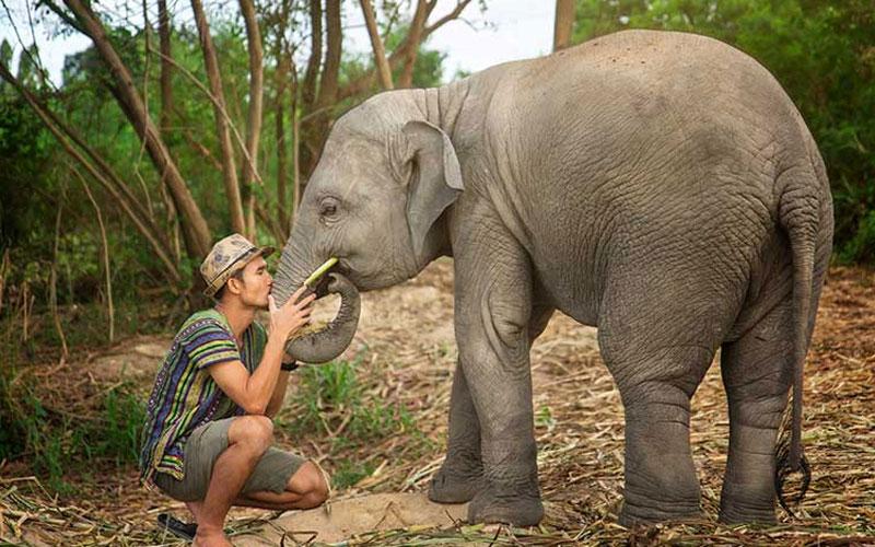 Pattaya Elephant Jungle Sanctuary