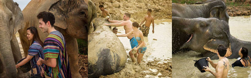 Feeding & bathing the elephants