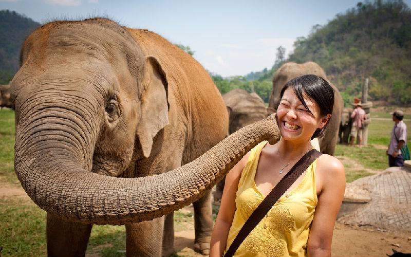 The elephant: Good morning, my friend!