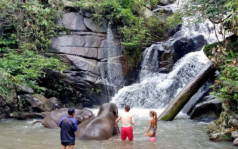 Swimming with elephants in waterfall.