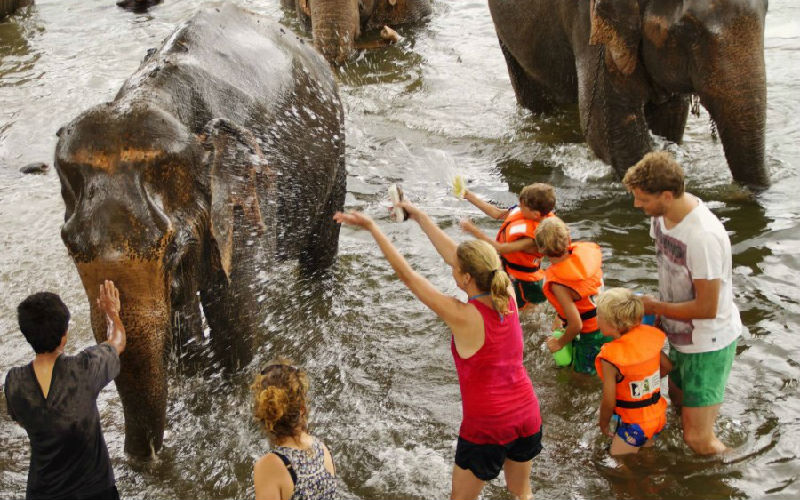 Kids can also swim with elephants.