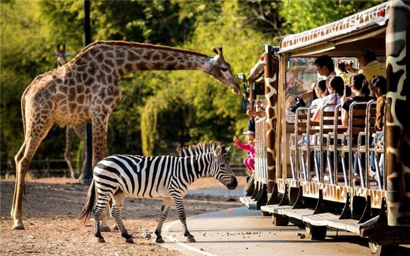 Thailand Zoo.jpg