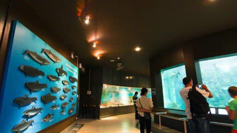 Phuket Aquarium2.jpg