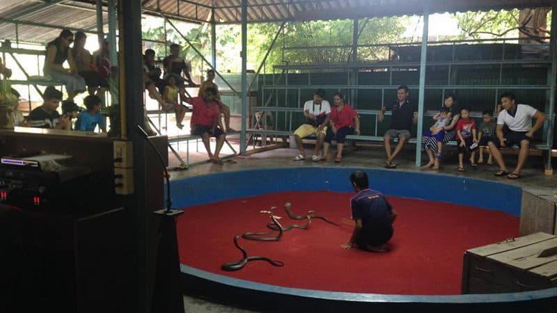 Phuket Cobra Show.jpg
