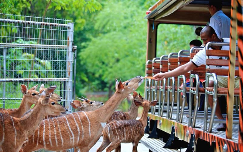 Chiang Mai Night Safari Park: Guides to Set into the Wildlife Territory at Night